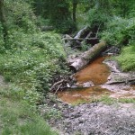Gaine's Mill Swamp
